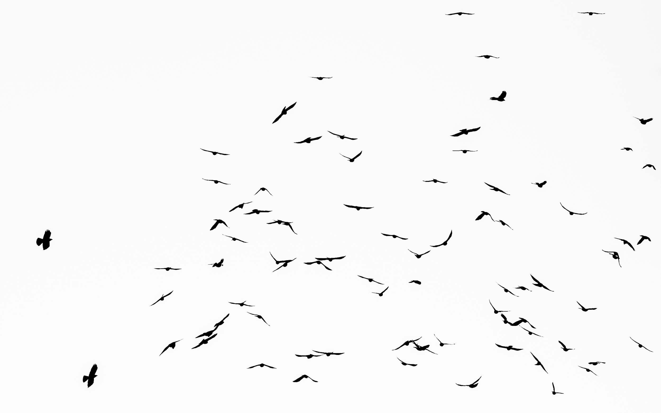 photo bird